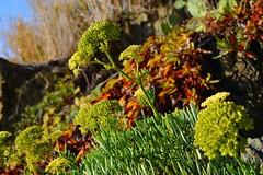 Cinque Terre Flowers (eaglelam89) Tags: travel italy europe italia terre manarola cinque