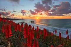 Aloe Vera Sunset at Scripps (sameermundkur) Tags: ocean california sunset clouds la pier aloe san pacific diego jolla scripps