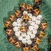 Newly-hatched brown marmorated stink bugs (BMSB)
