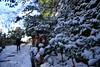 146 (Mayo Takamoto) Tags: winter snow kyoto 京都 冬 kibune kurama 貴船 鞍馬 kihune
