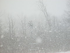More Snow! (SusanKSchutz aka reddeviltj) Tags: snow michigan sunday january winterwonderland absolutemichigan michpics