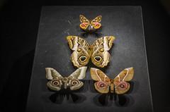 _DSC1888 (farfallenellatesta) Tags: fnt farfallenellatesta g6 gioiellia6zampe specola museostorianaturale firenze