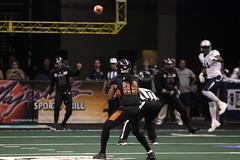 Arizona Rattlers 2016 (Ronald D Morrison) Tags: arenafootballleague afl arizonarattlers azrattlers football professionalfootball professionalsports sports