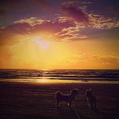 Can dogs appreciate beauty? (johnnyp_80435) Tags: kleberg gulfofmexico sun ocean horizon dawn sunrise sand nationalseashore padreisland texas gulfcoast shoreline shore beach shihtzu dog