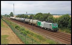 SNCFF (4)27105+keteltrein te Alvimare (Allard Bezoen) Tags: frankrijk sncff sncf ef f fret cargo goederentrein goederen alvimare trein train zug loc eloc lok elok lokomotieve locomotive locomotief serie 27000 bb27000 bb alsthom prima prima1 427105 27105 keteltrein ketelwagentrein ketelwagens