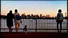 overlook (Chris Blakeley) Tags: seattle hipstamatic gasworkspark lakeunion candid streetphotography