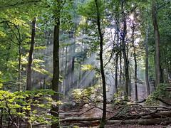 Licht (Wunderlich, Olga) Tags: licht rgen sonnenstrahlen deutschland