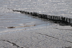 Patterns and lines (Cefn Ila) Tags: redwick gwentlevels mudflat posts groyne sea shore