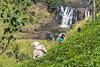 Sri Lanka (T E E J O O F O O T O O) Tags: srilanka teapickers theplukster