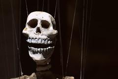 Marionette. (Joseph Skompski) Tags: crownsvillemd crownsville maryland revelgrove marylandrenaissancefestival renaissancefestival renaissancefair renaissance marionette skeleton skull