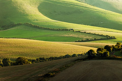 Downland Glow (S l a w e k) Tags: southdowns national park rolling hills countryside rural farming landscape uk england sussex outdoors