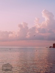 ( Black Orchid ) Tags: summer eolie island lipari bird seagull flying sea sunrise sun morning sky clouds pink vsco vscocam