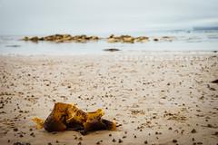 Seaweed on an Arran Beach (DefinitelyDreaming) Tags: beach seaside seaweed empty beautiful sand arran isleofarran scotland sonya99