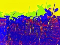 Floydian Trip (Dale Michelsohn) Tags: cows colour trip lsd floyd dalemichelsohn art popart