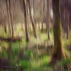 Woods in Spring (Pauline Deas) Tags: abstract panning technique woods woodland spring springtime callander trossachs trees outdoors scotland