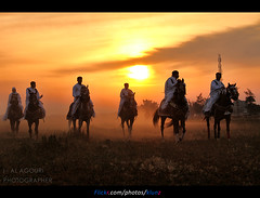 Knights Benghazi . . ( [ Libya Photographer ]) Tags: horses horse canon knights 7d libya benghazi