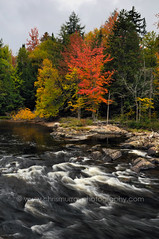 Autumn Stream (ChrisMurrayPhotography) Tags: autumn trees red newyork fall stream adirondacks foliage