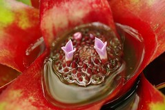 20101212_2163_ExoticFloral_sm (Takamur Bandit) Tags: flower 35mm botanical pentax exotic da tropical limited k7