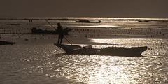 (Alain Bachellier) Tags: bali mer seaweed travail worker farmer ferme algues lembongan nusalembongan travailleur collectingseaweed seafarmer algoculture fermealgue