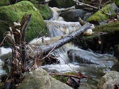 A small brook skipping downhill (Silva_D) Tags: water waterfall moss stones brook vatten mossa vattenfall bck setnar