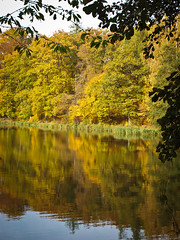 Herbst (goodbyetrouble) Tags: autumn fall laub herbst teich bltter spiegelung bunt drei teiche lich