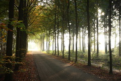 Formerhoek Herfstlicht (Wim Zoeteman) Tags: road autumn oktober sun fall backlight landscape october herfst lane beech 2012 landschap tegenlicht beuken beeches beuk sunstreaks beukenlaan svnr formerhoekweg wimzoeteman