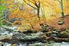 Golden path (.:: Maya ::.) Tags: autumn tree fall nature river reserve bulgaria есен stara reka природа планина река planina българия стара резерват балкан централен mayaeye mayakarkalicheva маякъркаличева