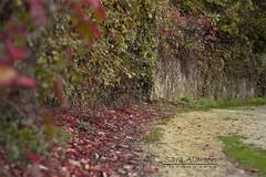 OTOO - TARDOR - AUTUMN  (EXPLORE) (Sara (Cuka)) Tags: autumn hojas rojo camino