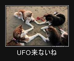 UFO来ないね #UFO #犬 (Demochi.Net) Tags: life cute sexy japan fun japanese motivator culture 日本 ペット 猫 demotivator 金 家族 結婚 ゲイ 女 子供 おっぱい 愛犬 政治 社会 巨乳 文化 眼鏡 教育 demotivators 経済 女性 初恋 r18 女子 カップル 子猫 女装 お笑い motivators 会社 少子化 企業 ユーモア 恋 悪い 格差 風刺 一言 デモチ 大喜利