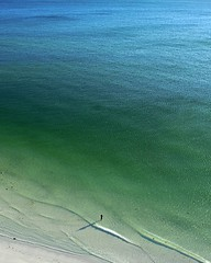 Lone Swimmer at Lido Beach, Florida (Nest