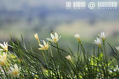 KhaoYai view by มาเรีย ณ ไกลบ้าน_G7202358-031