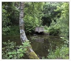 Rennes Forest #5 (Oeil de chat) Tags: fujifilm x20 couleur foret vert nature serie promenade