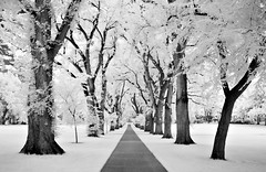 the oval - Infrared (eDDie_TK) Tags: campus ir colorado co infrared csu ftcollins theoval coloradostateuniversity ftcollinsco