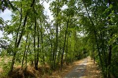 Panaro (Lalalleba) Tags: tree path sun summer green country