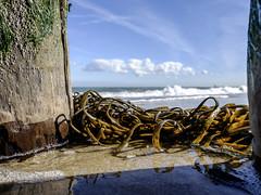 Seaweed (Wouter de Bruijn) Tags: fujifilm xt1 fujinonxf14mmf28r seaweed weed sea plant landscape nature seascape wood sand beach clouds macro reflection outdoor depthoffield