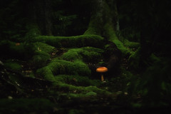 In another land... (8230This&That) Tags: moss forest mushroom orangemushroom secretworld secretgarden magical composite