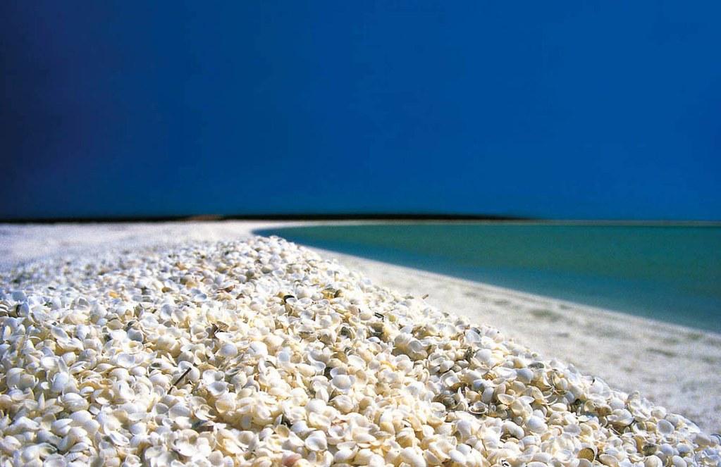Biển vỏ sò
