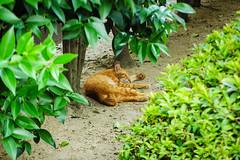 Today's Cat@2016-08-13 (masatsu) Tags: cat catspotting thebiggestgroupwithonlycats pentax mx1