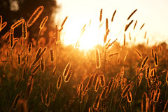 The place were we belong (A.Ciepielewska) Tags: polska poland fx fullframe nikon nikond610 nikon610 nature natura polishphoto polishgirl light lighting gloss bright warm fields countryside village zachd soce sun sunshine shine shining photography lubelskie outside outdoor landscape