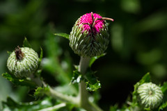 flower (nak.viognier) Tags: flower ryokuchipark osaka   olympusepl3 leicadgmacroelmarit45mmf28