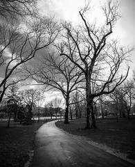 The Path (Marcel Weichert) Tags: boston bostoncommon park path tree usa massachusetts unitedstates us