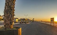 Sunrise strip (janlof671) Tags: plage narbonne morning beach outdoor palm sunrise