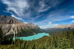 Peyto Lake (Dan Fleury Photos) Tags: ab hikes trails pines emerald blue banff parkscanada parks mountain forest glacial lake peyto cans2s alberta improvementdistrictno9 canada ca