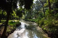 a gua que vai (flavia souza - photo hobby) Tags: sopaulo crrego ibirapuera gua nature natureza