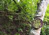 Welcome to the cacao finca (little_duckie) Tags: minca bonda colombia southamerica finca cacao waterfall cascada jungle