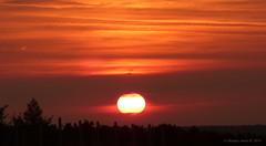 Sunrise (A. Meli) Tags: sun sunrise nap nature napfelkelte natur napfny sonnenaufgang sonne landscape landschafstbild tjkp termszet felhk felhs autumn sz herbst szeptember september fa fk g gbolt himmel sky orange red narancssrga piros