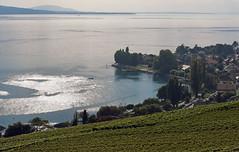 Vaud, Switzerland, Geneva lake, Lavaux (photoriel) Tags: vaud switzerland genevalake laclman lman lac landscape lavaux riex epesses cully endofsummer worldtrekker