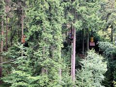 P8234099e (topzdk) Tags: treeclimbing summer 2016 czechrepublic ski slope lanovy park