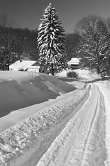 Winter in the Holler- Morgantown, WV 2016 (bangela95) Tags: outdoor winter snow blizzard nikon d3200 wv mountains appalachia 2016 white monochrome black rural road tracks community