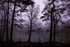 Tree silhouettes. (AlanHowe :)) Tags: blea tarn lake district